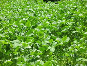 Tips for Great Fall Food Plots