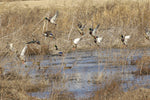 Guides Choice Waterfowl Forage (1 acre)