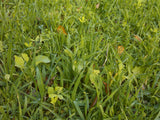 Whitetail food plot seed, barassicas food plot seed