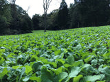 BioLogic New Zealand Maximum deer food plot seed field