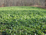 turnips food plot seed deer food plot seed