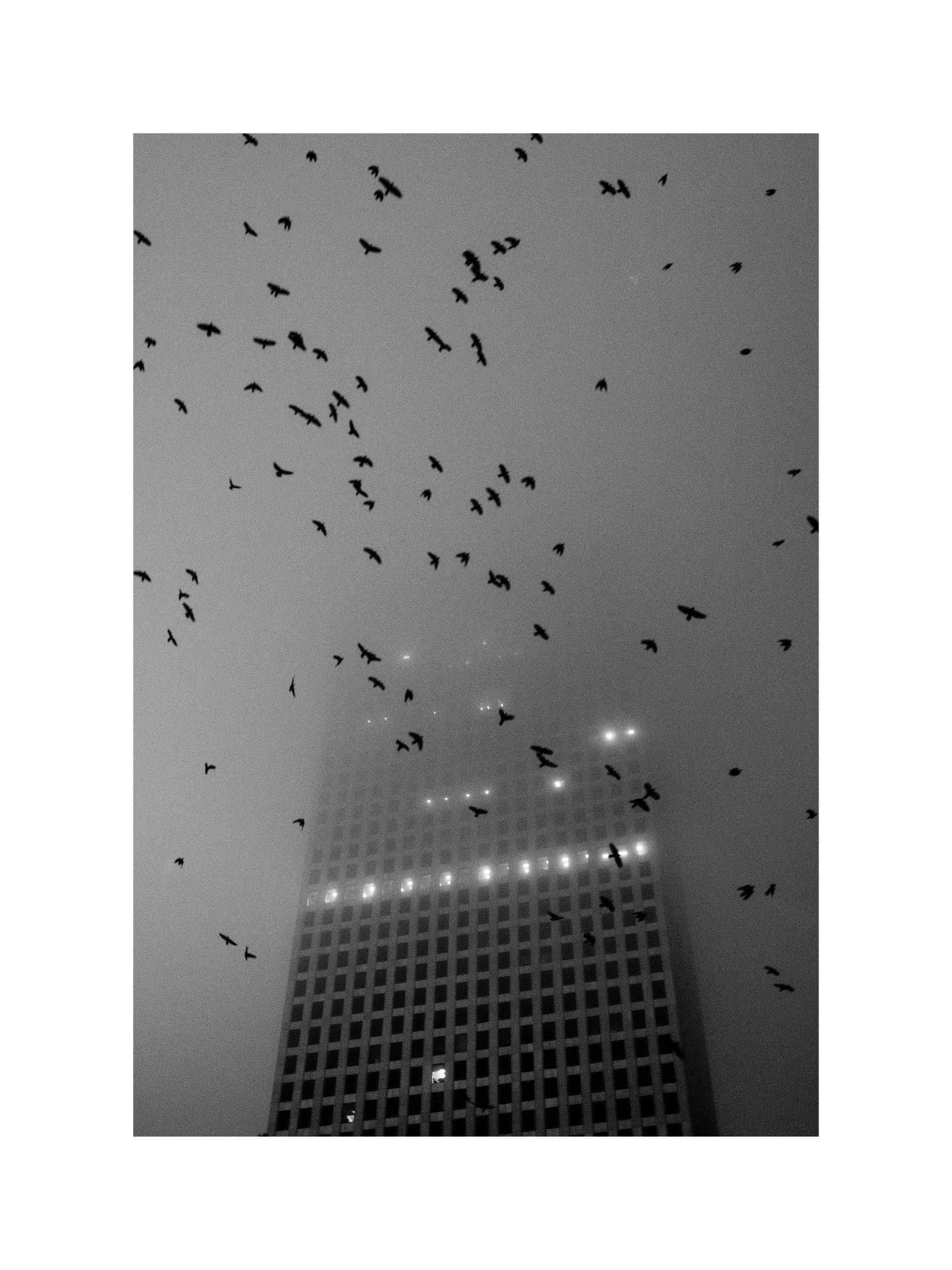 Poster Monochrome Birds over City