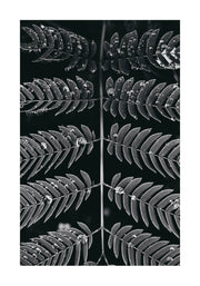 Poster Monochrome Symmetric Leaves