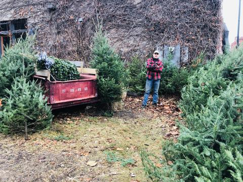 The Mercantile Had A Busy Week And It All Started By Cutting Down 25 Christmas Trees for Downtown Stillwater.