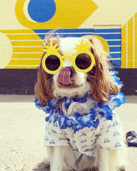 WOOF WOOF! It's Dog Days On The Patio!  Our first Mercantile Market Sunday August 18th 11-1pm