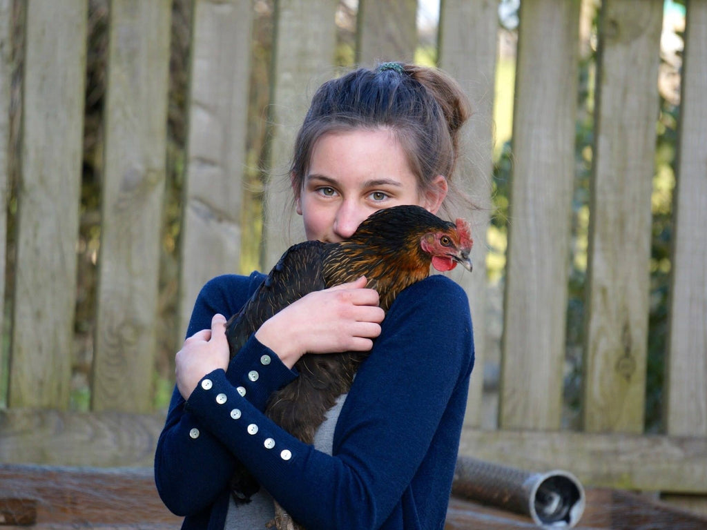 How to Convince your Family to Let you Keep Chickens 🐔 Yay!