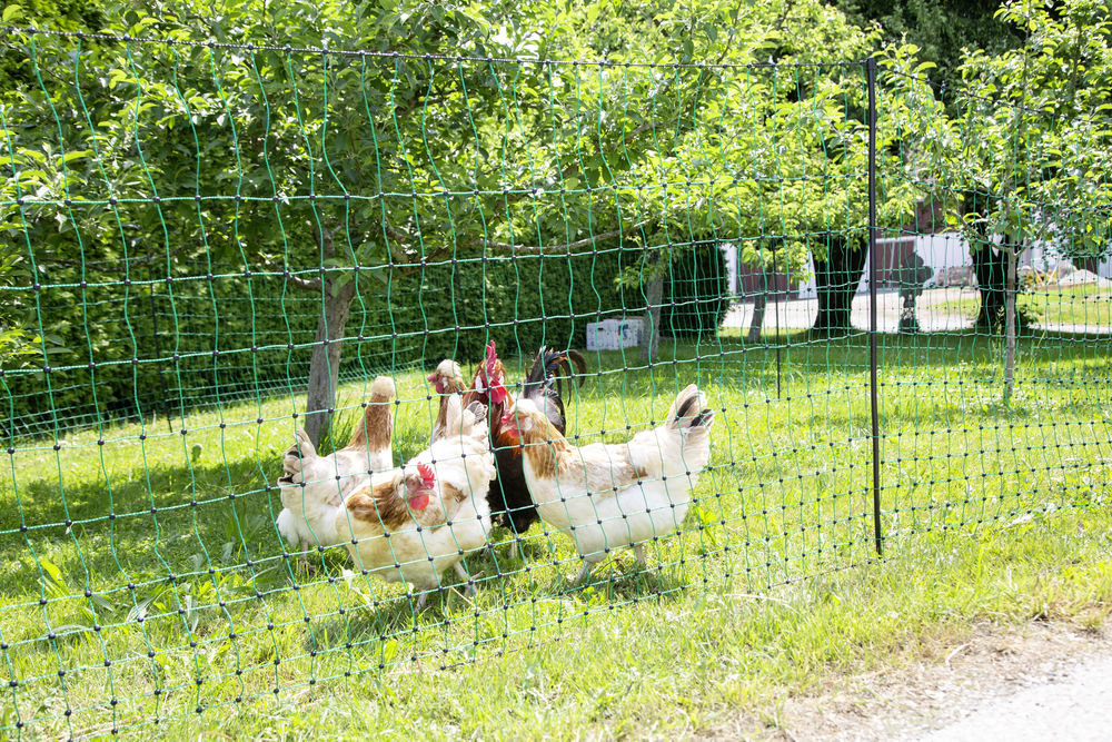 Poulnet Non-electric Fencing green for Chickens