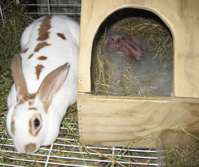 Rabbit Kindling Box (Kitting Box)