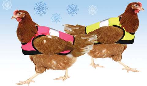 Two brown shavwr hens sporting a pink and a yellow hi-vis chicken jacket