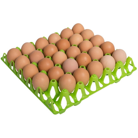 Plastic Egg Tray Single - For Chicken Eggs