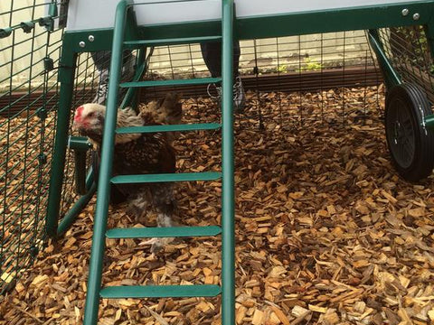 Eglu Go UP Chicken Coop Frame and Ladder