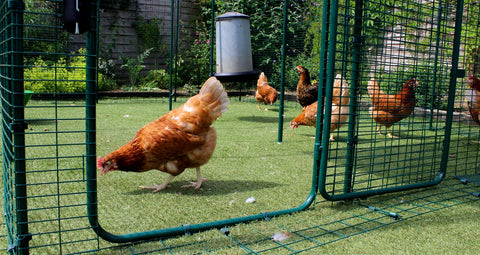 Omlet Walk-In Chicken Run
