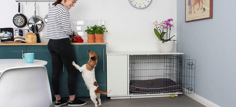 Fido Dog Studio Dog Crate