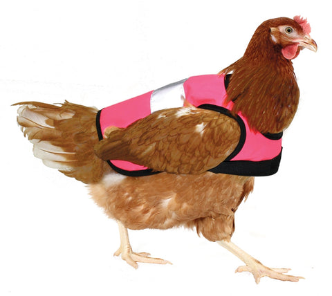 Brown Shaver wearing a pink hi-vis chicken jacket