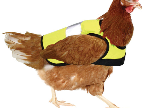 Brown Shaver wearing a yellow hi-vis chicken jacket