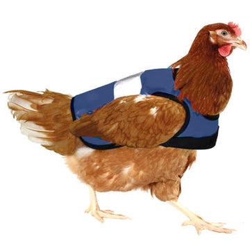 Brown Shaver wearing a blue hi-vis chicken jacket