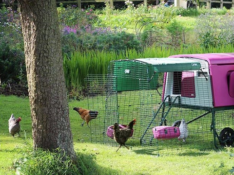 Eglu Cube Chicken Coop