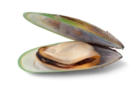 Appletons Mussel Boost