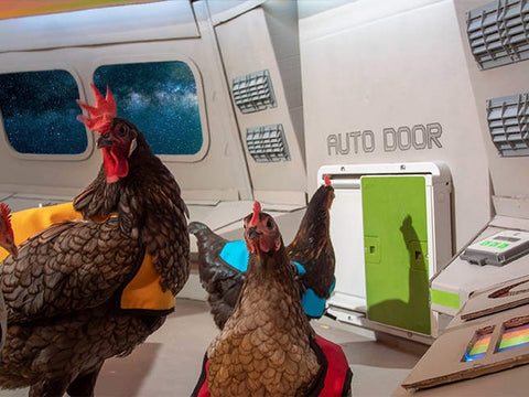 Omlet Autodoor - Automatic Chicken Coop Door