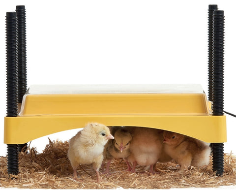 Brinsea EcoGlow Safety 600 Chick Brooder