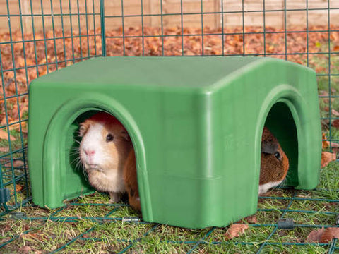 Zippi Mini Lop Small Rabbit & Guinea Pig Shelter