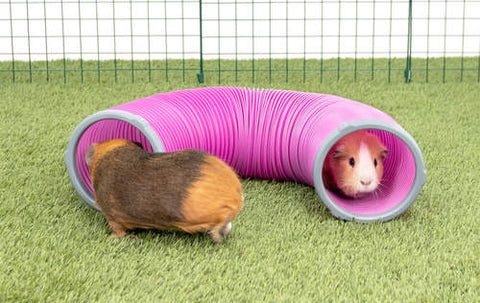 Mini Lop Rabbit & Guinea Pig Play Tunnels
