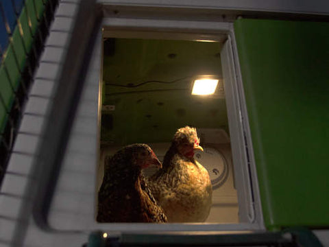 Coop Light - Automatic Chicken Coop Door