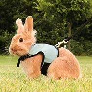 Soft Harness for Rabbits