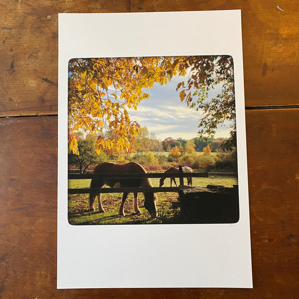 Petersham Horses