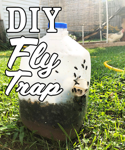 How to Build DIY Cheap & Effective Homemade Fly Traps