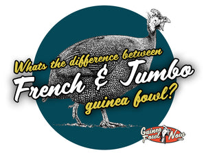 Difference between French and Jumbo Guinea Fowl