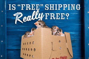 Is Free Shipping Really Free?