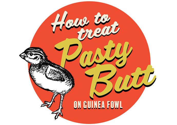 How to treat pasty butt in guinea fowl