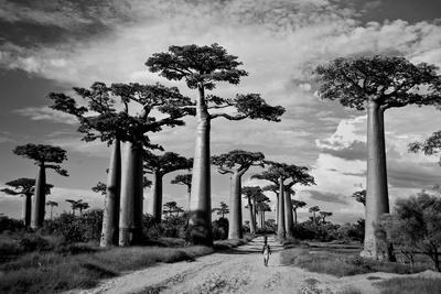 Featured ingredient: Baobab- The Tree of Life