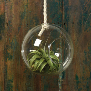 Hanging Bubble with Rope