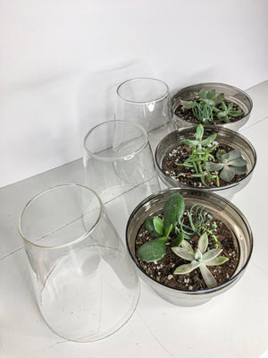 Succulent Terrarium With Plants (In Store Only)