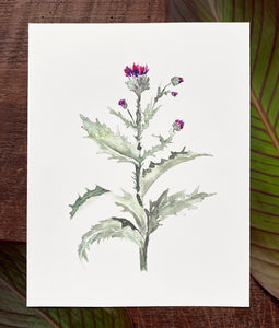 Cotton Thistle Print