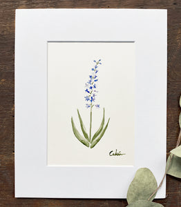 Larkspur Original