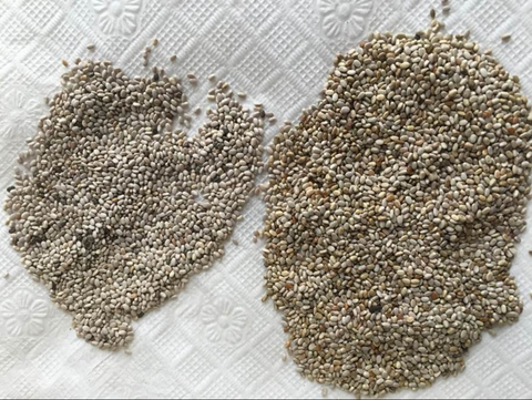 white chia and black chia gel