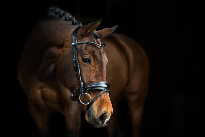 PS of Sweden GP Bridle Black with Black Padding