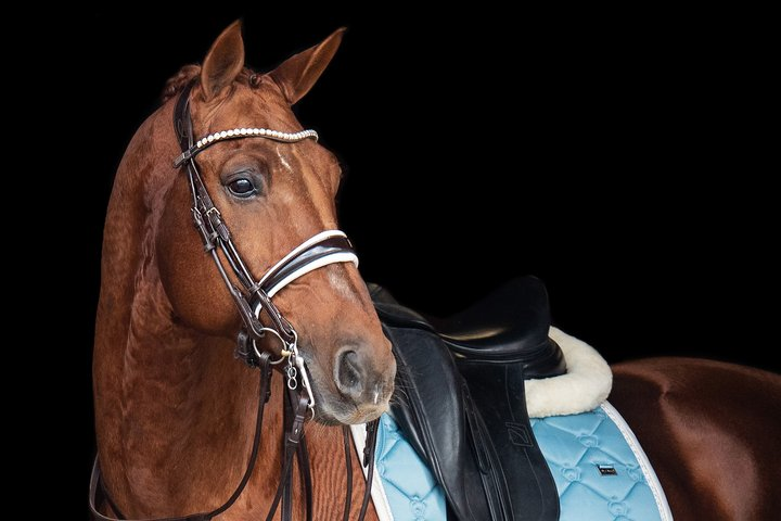 PS of Sweden GP Patent Double Bridle