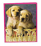 Animal Lover Pocket Folder, (48/unit), #2701 (J-11)
