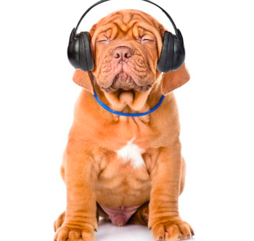 How Music Can Help Your Dog Rest And Relax