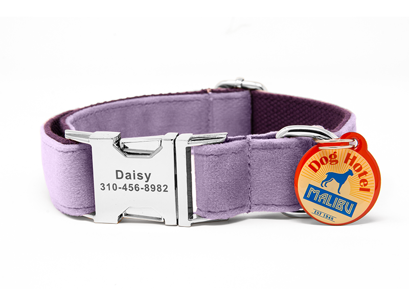 Custom Collar Purple