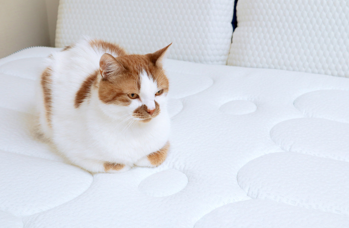 Essential things you should know before choosing Memory Foam Mattresses