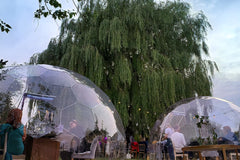 Dining Igloo: The Willow Tree approach to coronavirus restaurant situation