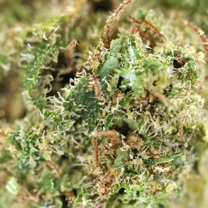White Widow Dried Cannabis Flower