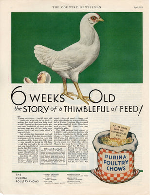 Vintage 1931 Purina Poultry Chicken Chows Food Ad