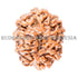 products/10MukhiRudraksha_10-004A_WEB.jpg