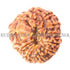 products/11Mukhi11-00816-20mmBWEB.jpg